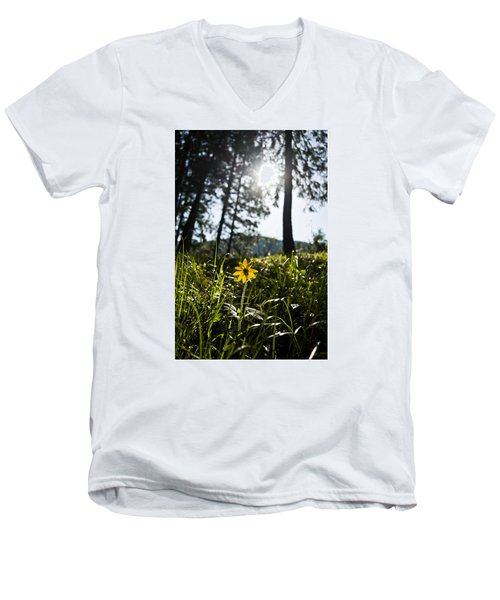 Balsamroot Men's V-Neck T-Shirt
