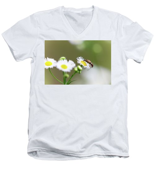 Beetle Daisy Men's V-Neck T-Shirt