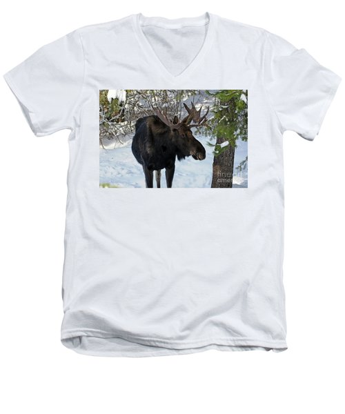 Big Moose Men's V-Neck T-Shirt