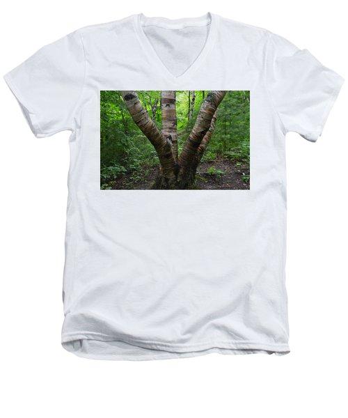 Birch Bark Tree Trunks Men's V-Neck T-Shirt