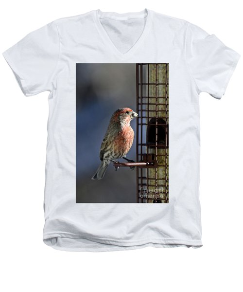 Bird Feeding In The Afternoon Sun Men's V-Neck T-Shirt