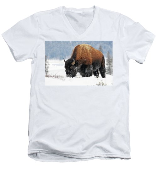 Bison Roaming In The Lamar Valley Men's V-Neck T-Shirt