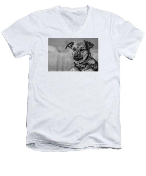 Black And White Dog Portrait Men's V-Neck T-Shirt by Daniel Precht
