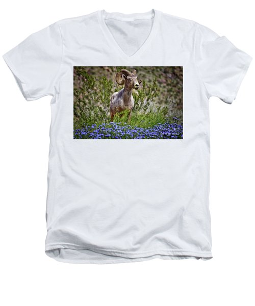 Blooms And Bighorn In Anza Borrego Desert State Park  Men's V-Neck T-Shirt by Sam Antonio Photography