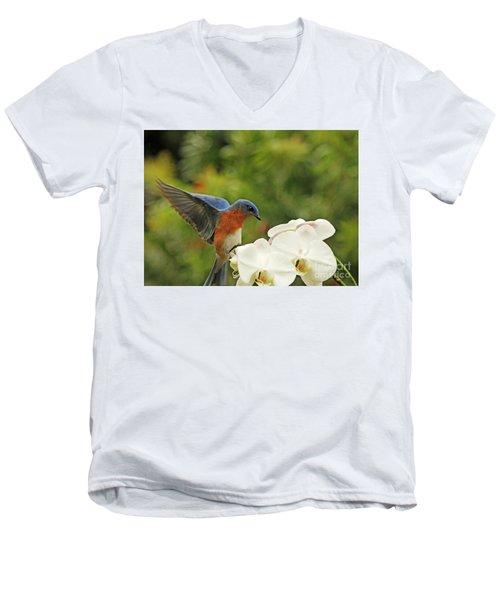 Bluebird Landing On Orchid Men's V-Neck T-Shirt