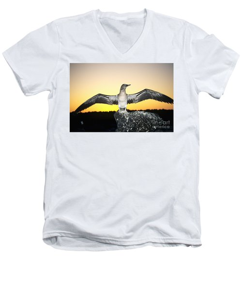 Booby At Sunset Men's V-Neck T-Shirt by Dave Fleetham - Printscapes