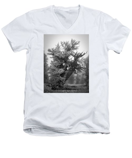 Bristlecone Beauty Men's V-Neck T-Shirt