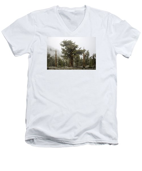 Bristlecone Elder Men's V-Neck T-Shirt