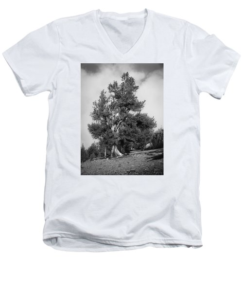Bristlecone Pine Men's V-Neck T-Shirt
