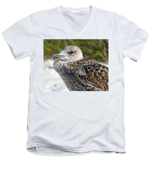 Brown Gull At Wiggins Pass Men's V-Neck T-Shirt
