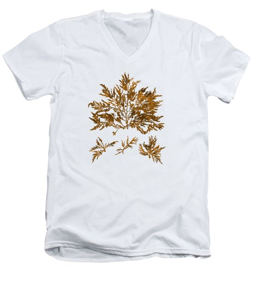 Men's V-Neck T-Shirt featuring the mixed media Brown Seaweed Marine Art Chylocladia Clavellosa by Christina Rollo