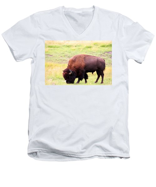 Buffalo Roaming Men's V-Neck T-Shirt