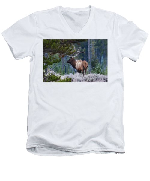 Bull Elk In Forest Men's V-Neck T-Shirt