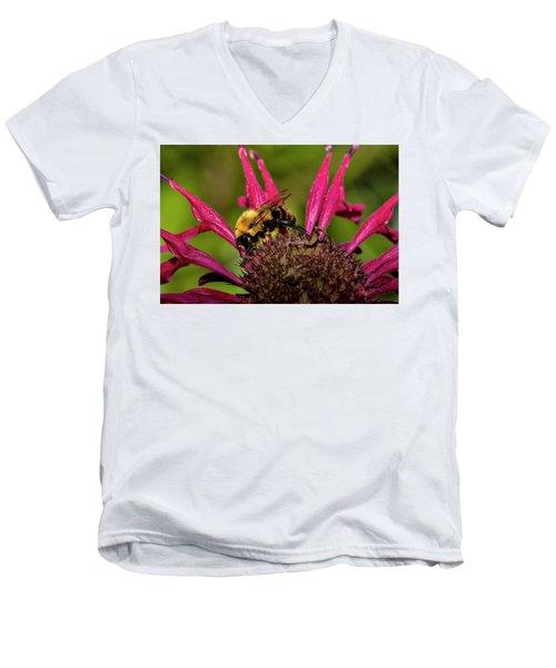 Bumble Bee Men's V-Neck T-Shirt