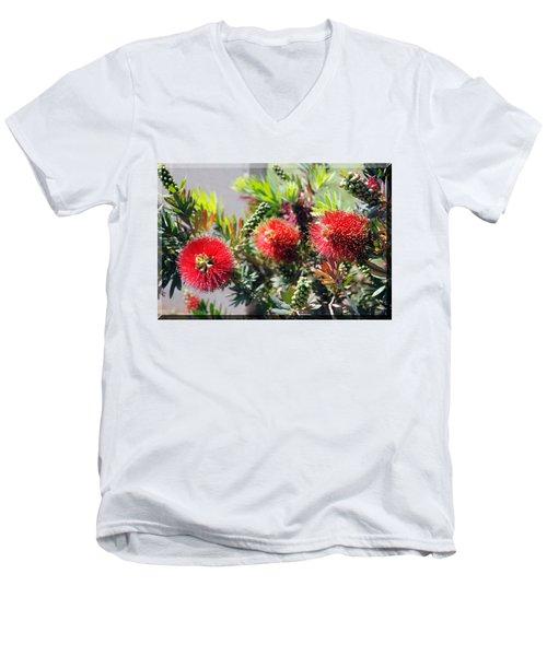 Callistemon - Bottle Brush T-shirt 6 Men's V-Neck T-Shirt