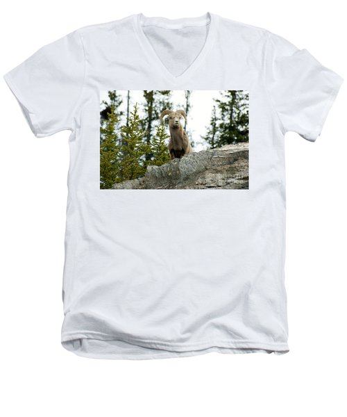Canadian Bighorn Sheep Men's V-Neck T-Shirt