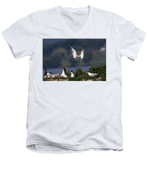 Caspian Tern Colony Men's V-Neck T-Shirt