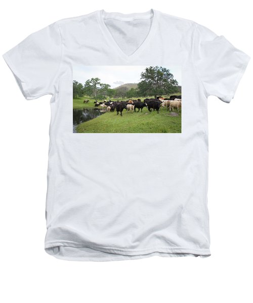 Cattle Men's V-Neck T-Shirt