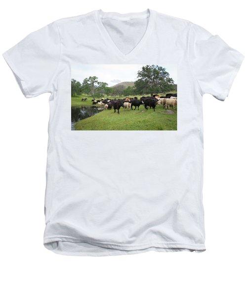 Cattle Men's V-Neck T-Shirt