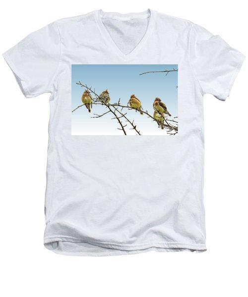 Cedar Waxwings Men's V-Neck T-Shirt by Geraldine Scull