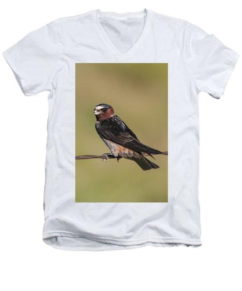 Cliff Swallow Men's V-Neck T-Shirt