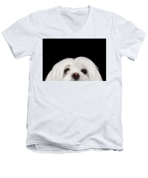 Men's V-Neck T-Shirt featuring the photograph Closeup Nosey White Maltese Dog Looking In Camera Isolated On Black Background by Sergey Taran