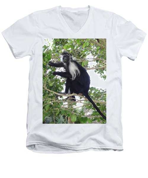 Colobus Monkey Eating Leaves In A Tree Men's V-Neck T-Shirt
