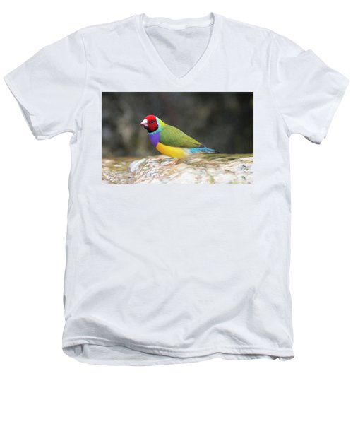Colorful Lady Gulian Finch  Men's V-Neck T-Shirt