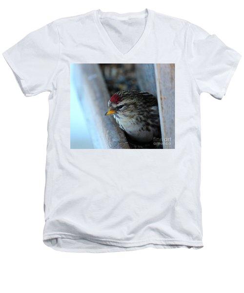 Common Redpoll Men's V-Neck T-Shirt