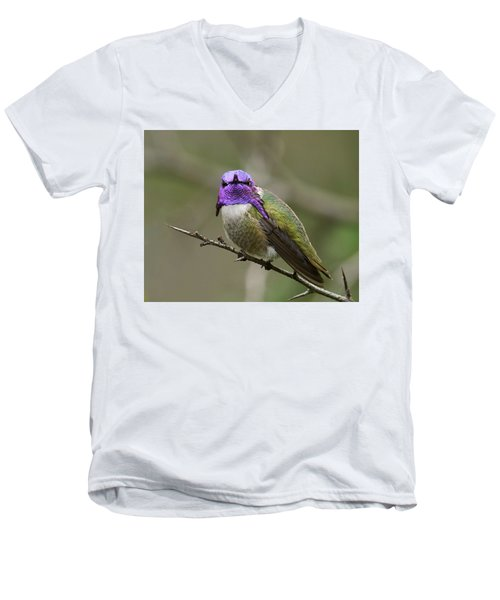 Costa's Hummingbird, Solano County California Men's V-Neck T-Shirt