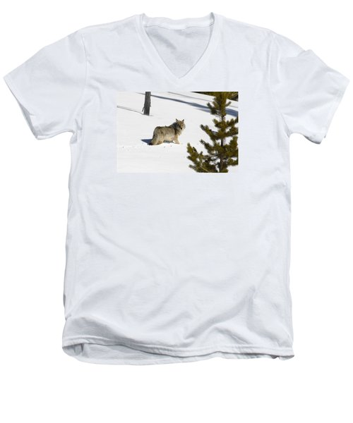 Coyote In Winter Men's V-Neck T-Shirt