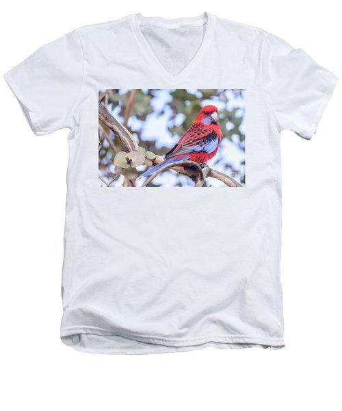 Crimson Rosella 03 Men's V-Neck T-Shirt
