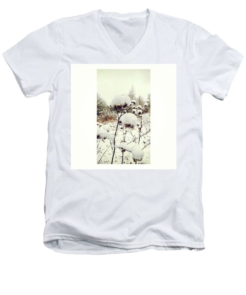 Crowns Of Snow