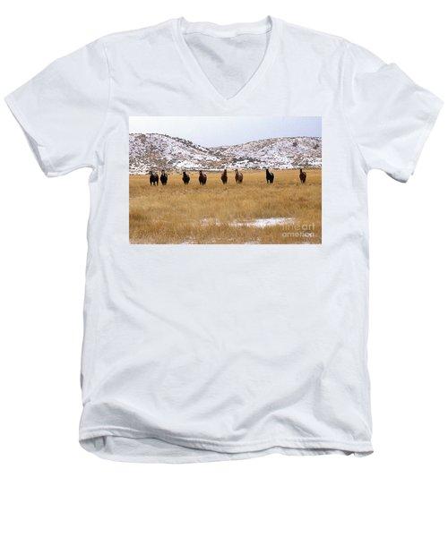 Curious Horses Men's V-Neck T-Shirt