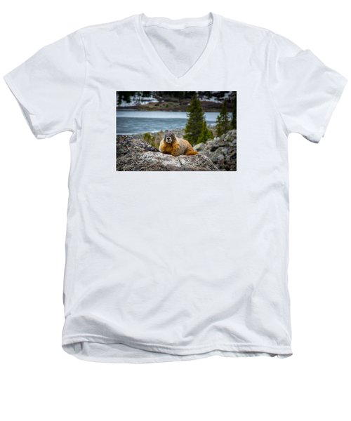 Curious Marmot Men's V-Neck T-Shirt