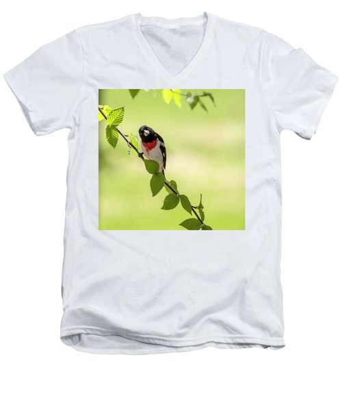 Cute Rose-breasted Grosbeak Men's V-Neck T-Shirt