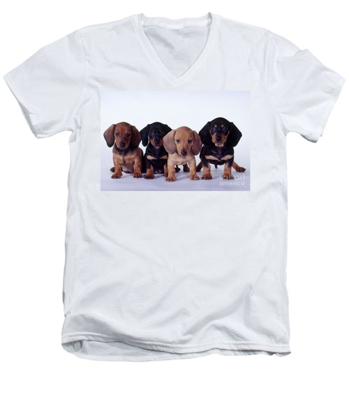 Dachshund Puppies  Men's V-Neck T-Shirt by Carolyn McKeone and Photo Researchers