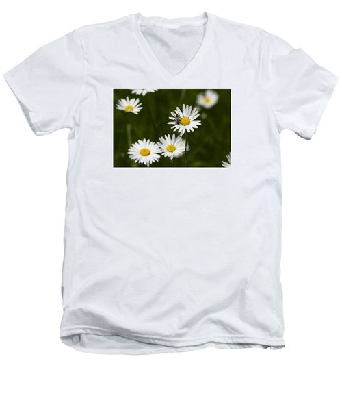 Daisy Visitor Men's V-Neck T-Shirt