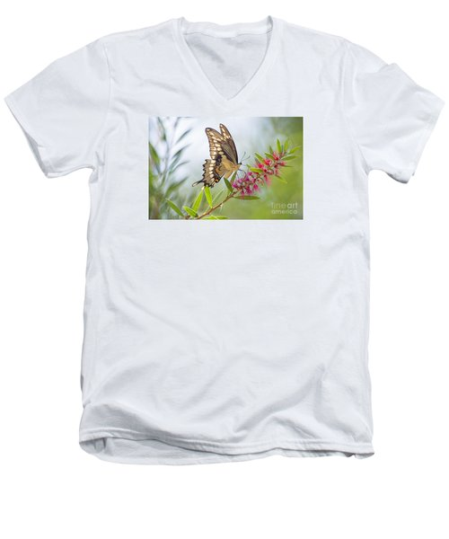 Eastern Tiger Swallowtail Butterfly On Bottlebrush Men's V-Neck T-Shirt by Bonnie Barry