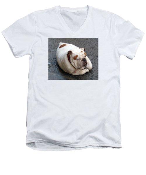 Eduardo Of Firenze Dog Men's V-Neck T-Shirt