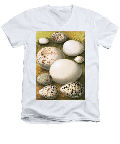 Eggs Men's V-Neck T-Shirt