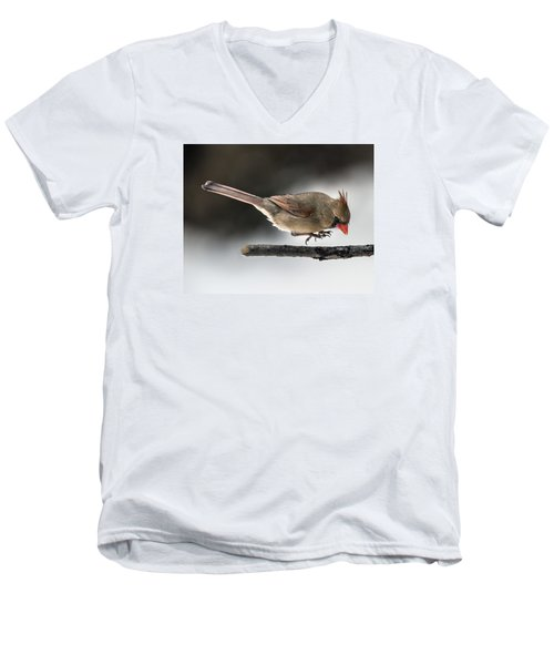 Female Cardinal Landing On Branch Men's V-Neck T-Shirt