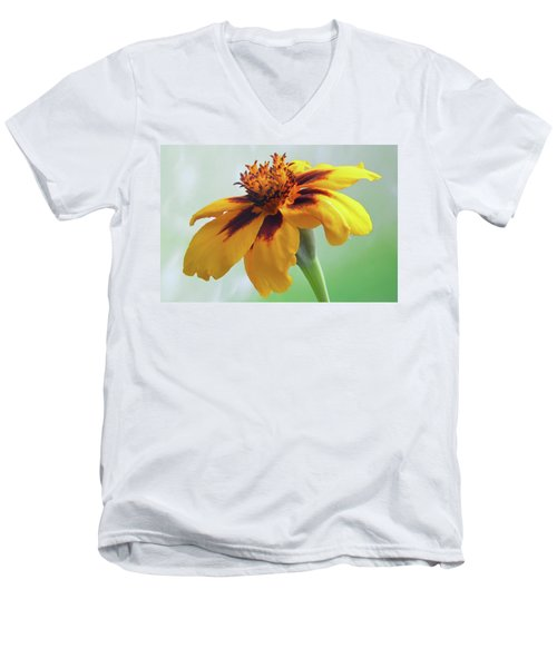 French Marigold Men's V-Neck T-Shirt