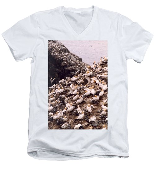 Gannet Cliffs Men's V-Neck T-Shirt