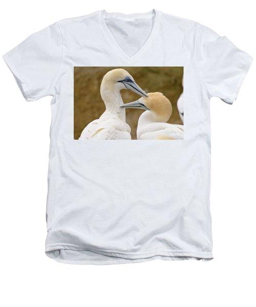 Gannet Pair 1 Men's V-Neck T-Shirt