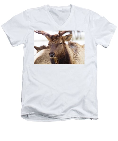 Men's V-Neck T-Shirt featuring the photograph Gaze From A Bull Elk by Jeff Swan