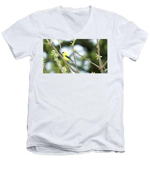 Goldfinch Men's V-Neck T-Shirt
