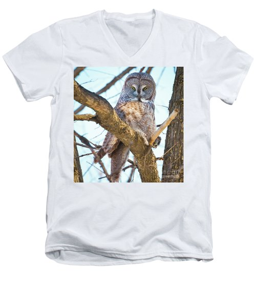 Great Gray Owl Men's V-Neck T-Shirt by Ricky L Jones