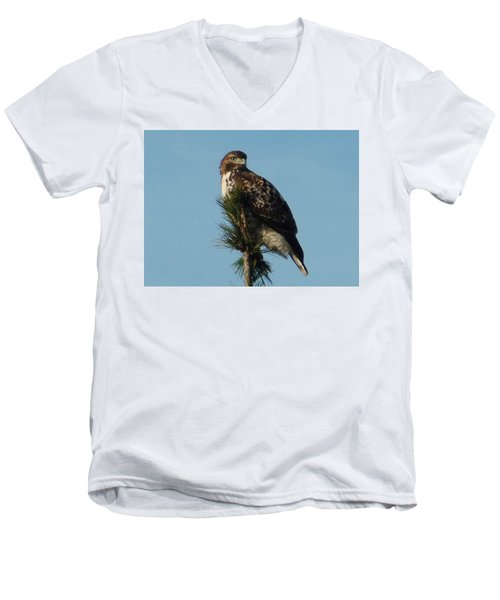 Hawk Atop Tree Men's V-Neck T-Shirt