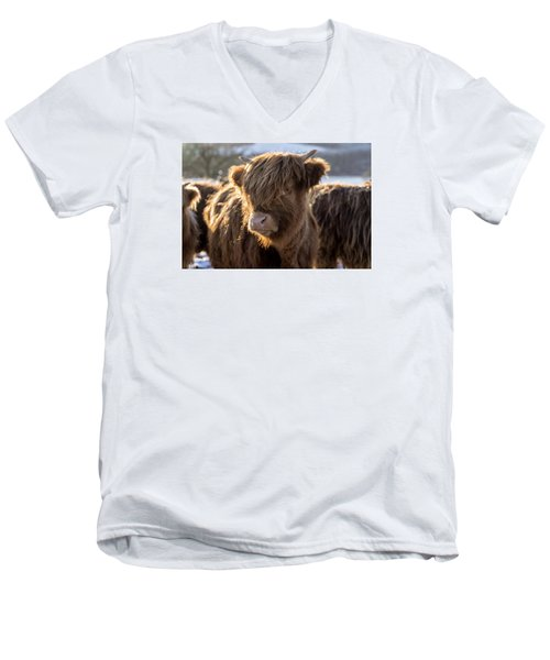 Highland Baby Coo Men's V-Neck T-Shirt by Jeremy Lavender Photography